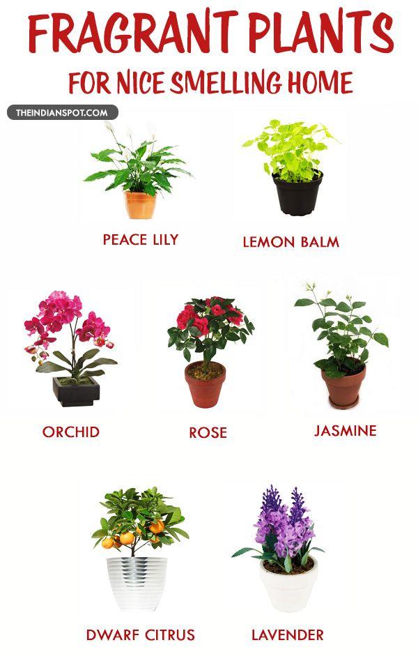Fragrant Houseplants For A Nice Smelling Home Fragrant Plant Inside Plants Plants