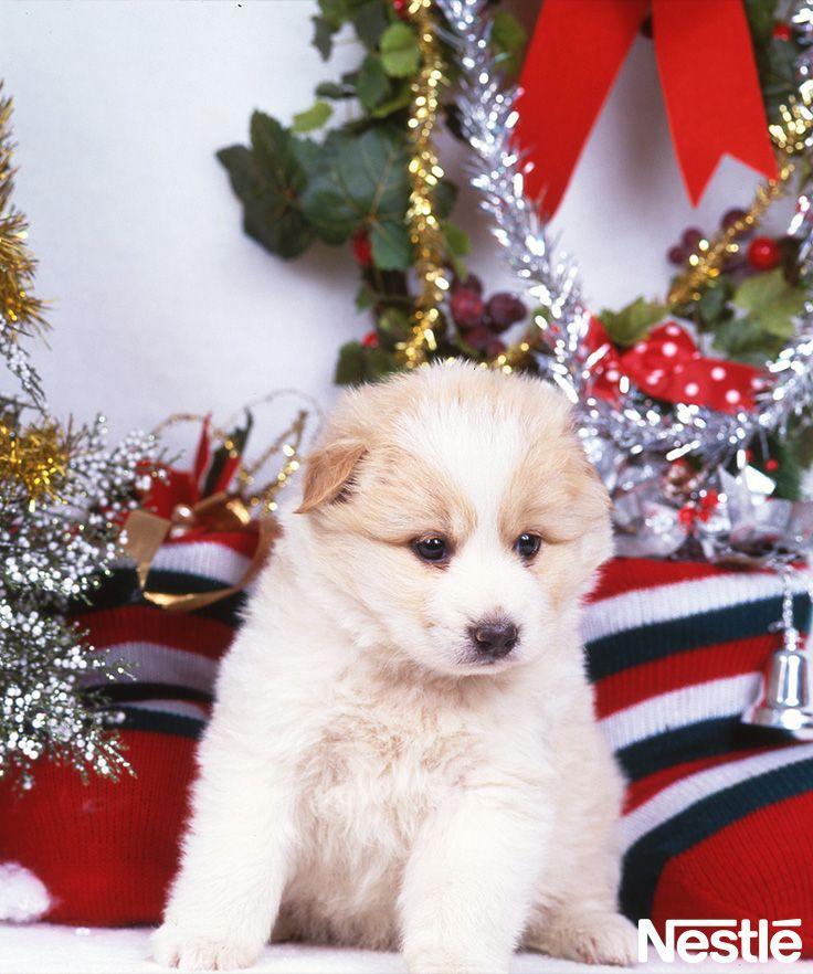 画像B 子犬とクリスマス♪ クリスマスツリー/クリスマス/Christmas