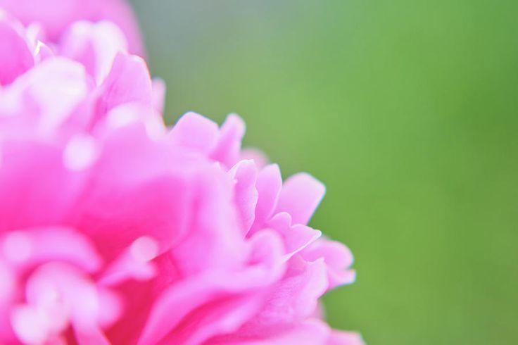 Pink Waves Photograph by Marfffa Art