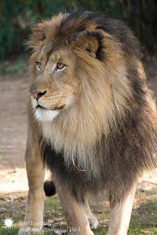 magnificent: Leo S, Leo Pantheras