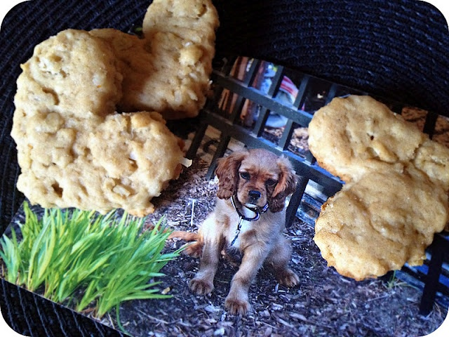 Homemade Peanut Butter Pup Biscuits.: Peanuts, Birthday Boys, Pet, Birthdays, Life Simple, Pup Biscuits, Butter Pup, Homemade Peanut Butter, Simple Measuring