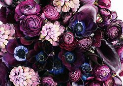 The Beauty of Flowers: Shades Of Purple, Inspiration, Deep Purple, Plum Bouquets, Purple Flowers, Colors Palettes, Violets, Floral Arrangements, Dark Colors