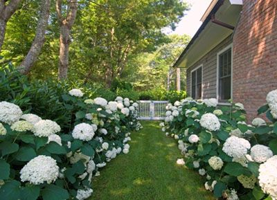 yard-makeovers-for-less.jpg (400×289)