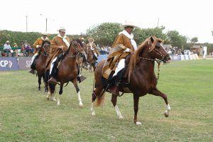 Caballos de paso peruano