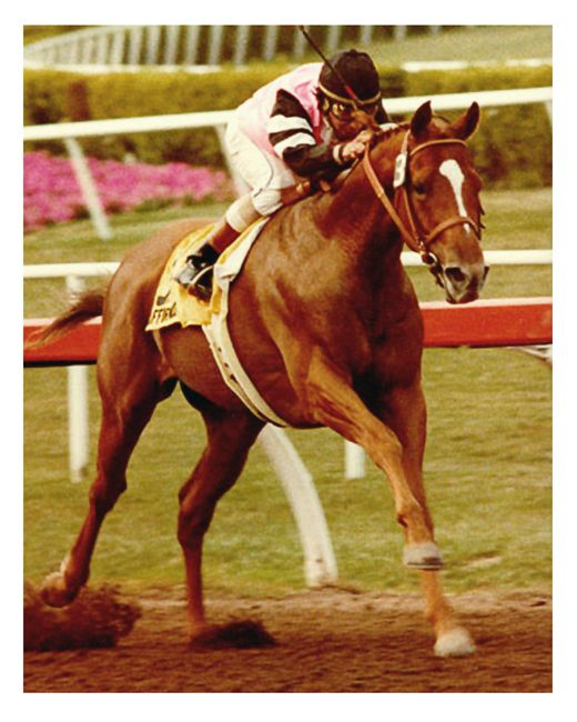 Affirmed...Triple crown winner 1978