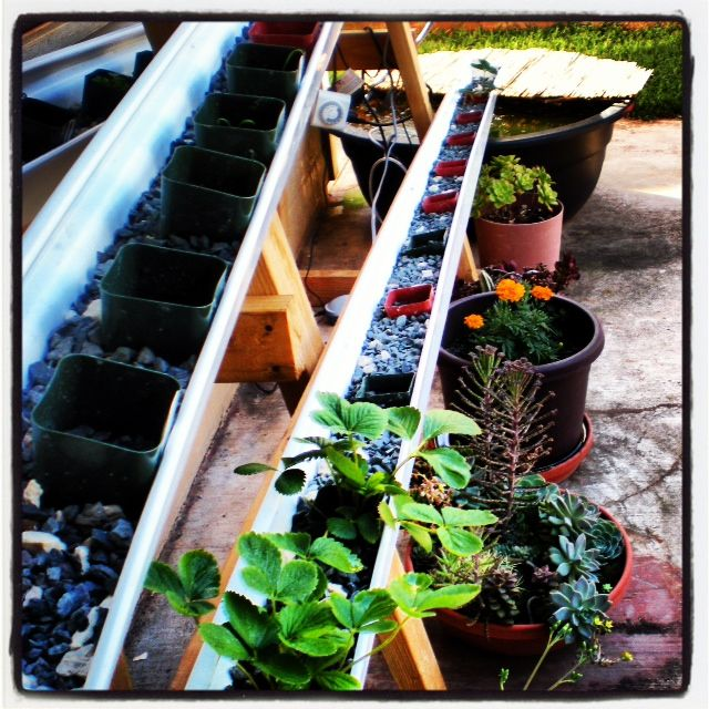 81 best images about projects to try on pinterest for Hydroponics in koi pond