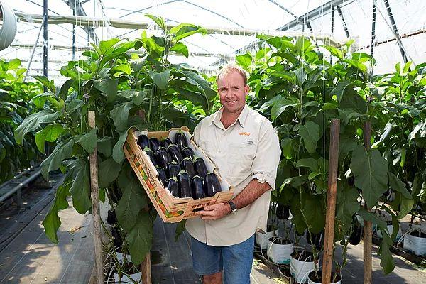 Aussie Eggplants