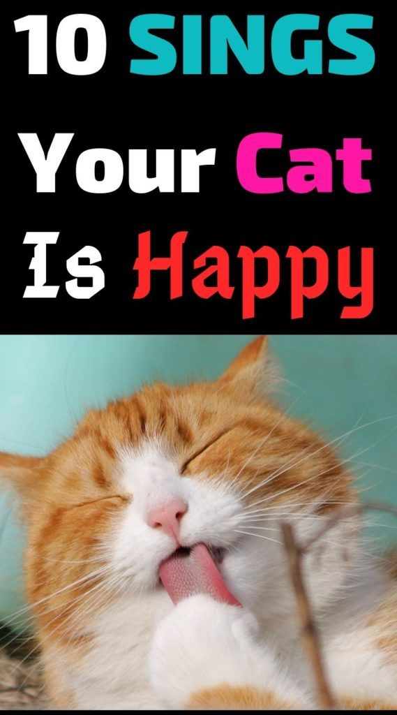 10 Signs Your Cat Is Truly Happy #cutecat #instacats #cutecats #petstagram #kitt… – cats cute
