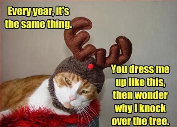 543 best Disrespectful to Cats images on Pinterest | Funny animals ...