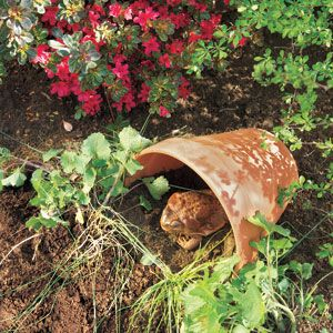 Quick and easy terracotta toad house. (Toads can reduce the population of insects and cutworms in your garden.)