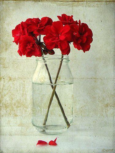 Un Frasco y flores muy rojas