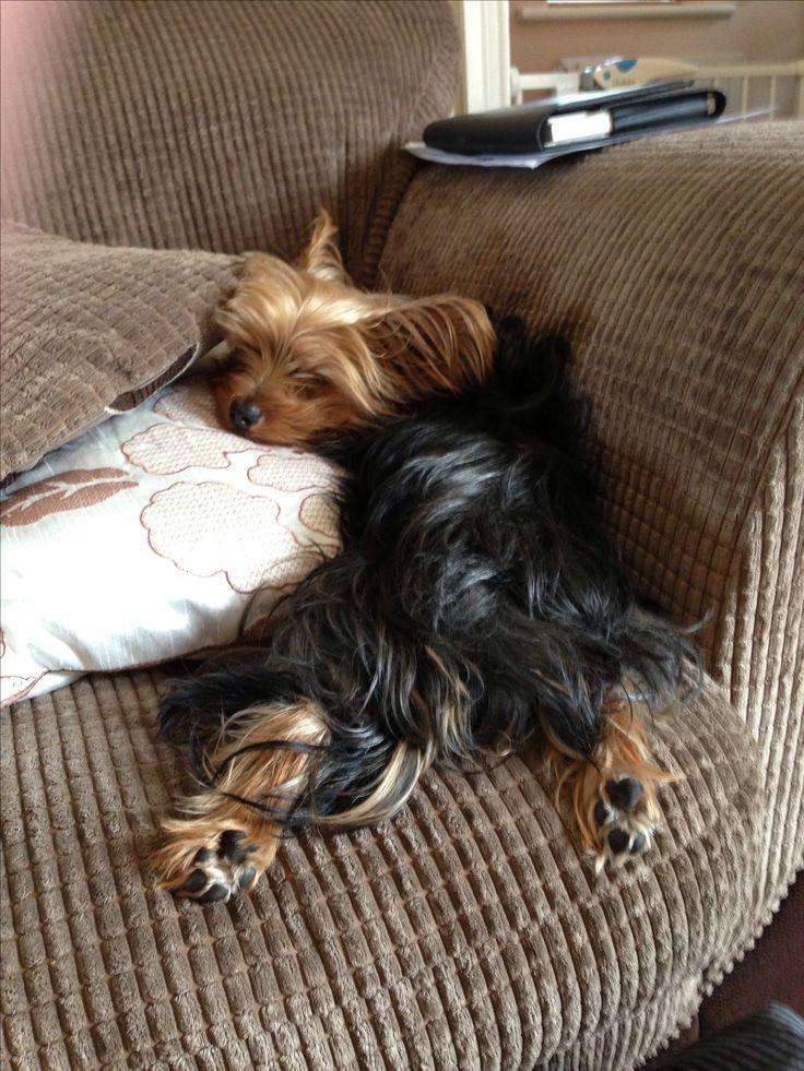 Brantley sleeps like this sometimes!