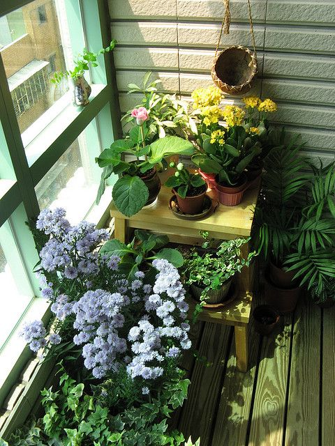 My balcony garden | Flickr - Photo Sharing!