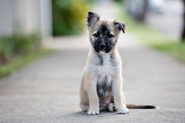 Dit zijn blijkbaar de populairste hondennamen van dit moment