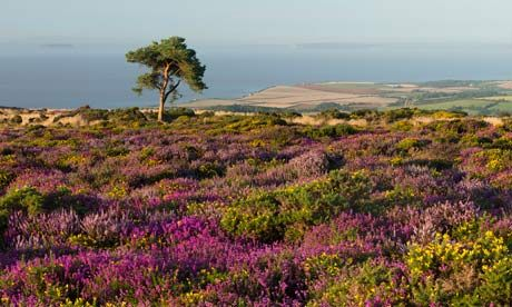 Quantocks Hills, Somerset - What to do in Somerset before and after the Glastonbury festival