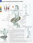 squat sentadillas frontales barra