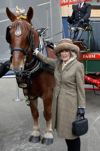 Camilla Parker Bowles Photos - Camilla, Duchess of Cornwall poses with a horse as she attends the Prince's Countryside Fund Raceday at Ascot Racecourse on November 24, 2017 in Ascot, England. - The Prince of Wales and Duchess of Cornwall Attend The Prince's Countryside Fund Raceday