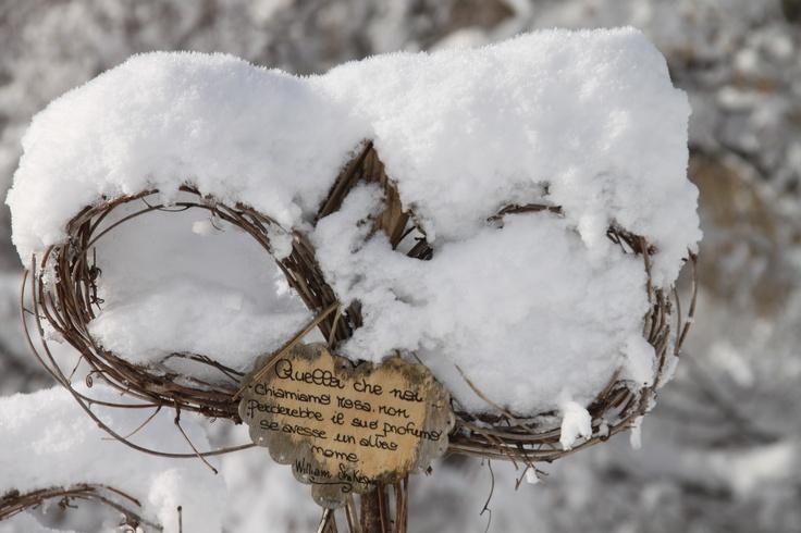 ....il roseto in versione invernale...