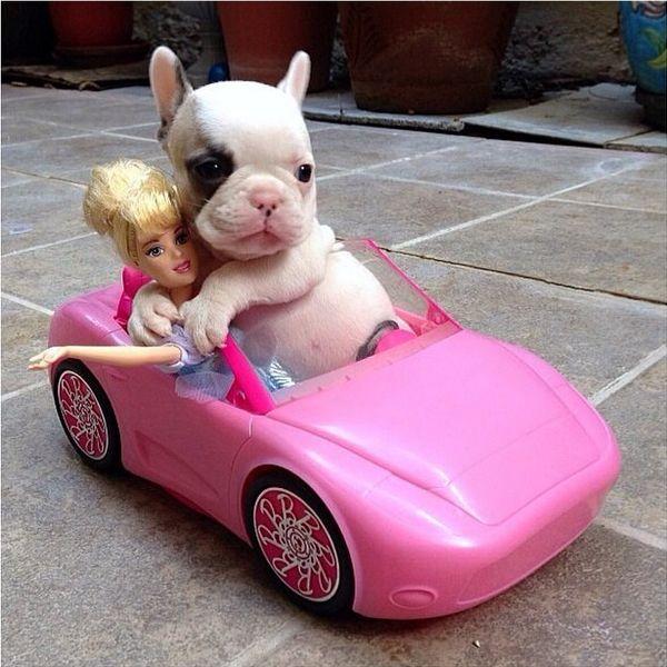 Come on Barbie;)