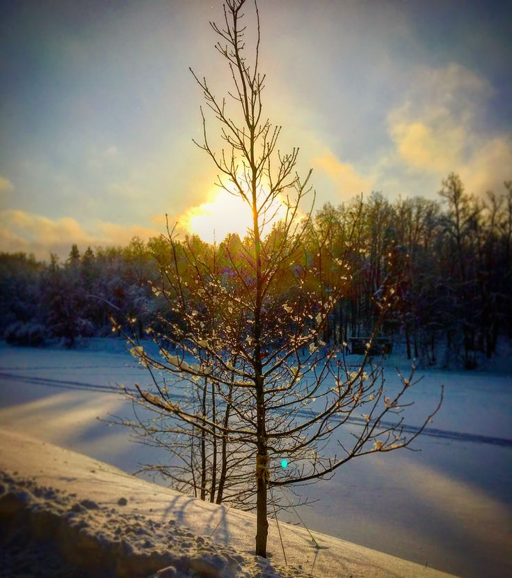 Remember winter...🌞#sun #frost #Winter #daydreams #fairytale ❄️#poetry 🌬⛄️#blue #sky #sunset  #white #snow #park #road 🛷⛷☃️#snowman #beautiful #tree #nature #landscape 🌲🌲🌲