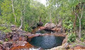 Image result for australian bush scenery
