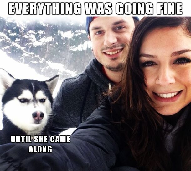Funny pictures of the day (67 pics) - Everything Was Going Fine Until She Came Along
