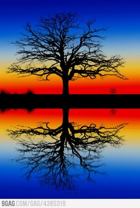 : Photos, Colors Combos, Natural Scene, Silhouette, Trees Of Life, Sunsets, Beautiful, Mirror Image, Photography