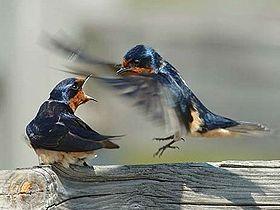 En güzel renkli kuşlar Video