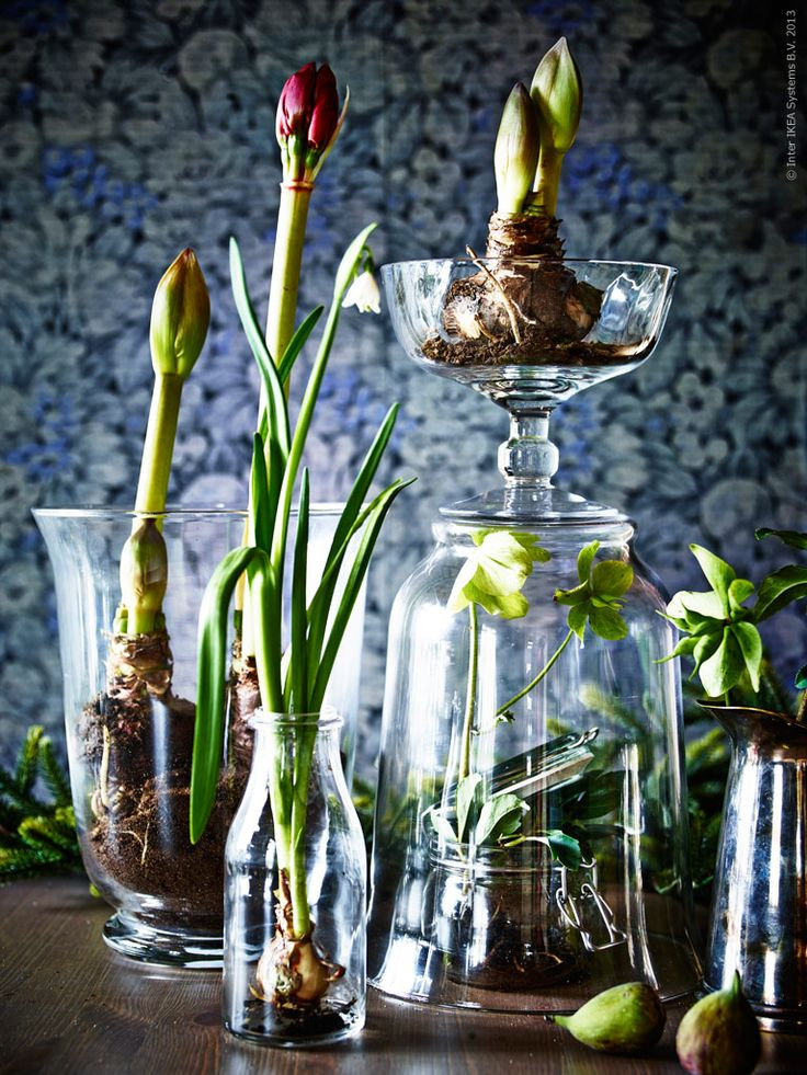 hyacint inspiration - Sök på Google