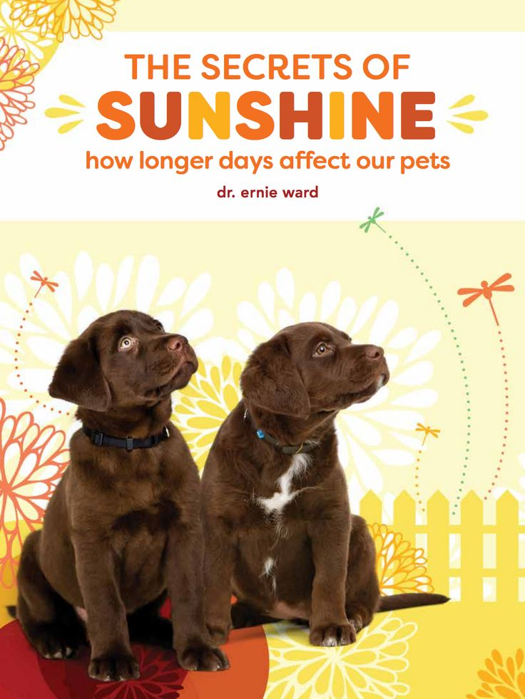 The Secrets of Sunshine: How Longer Days Affect Our Pets | Dr. Ernie Ward