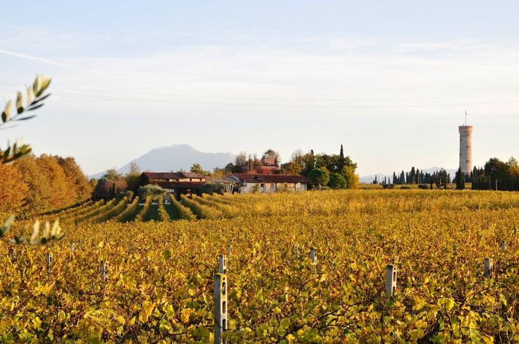 San Martino della Battaglia - autumn vineyards