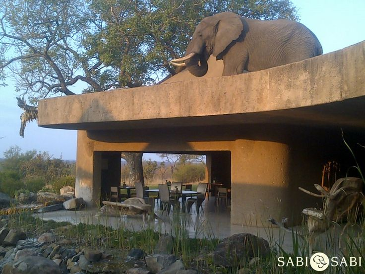 Happening now!! The beauty of a lodge that blends in with nature, nature blends in... PhonePic by Stefan Schoeman