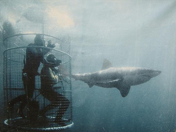 Sharks bucket-list
