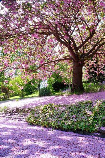 Pretty spring tree