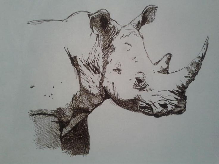 Rhino drawing   Art   Pinterest   Drawings and Rhinos