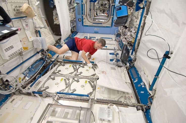 ISS-20 Robert Thirsk at the Minus Eighty Degree Laboratory Freezer - 國際空間站機組人員存儲樣本