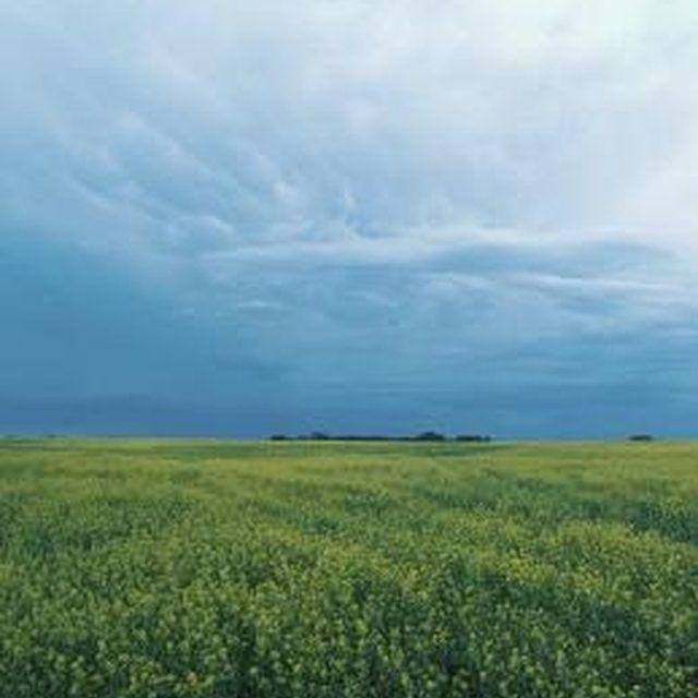 Alfalfa makes good hay.