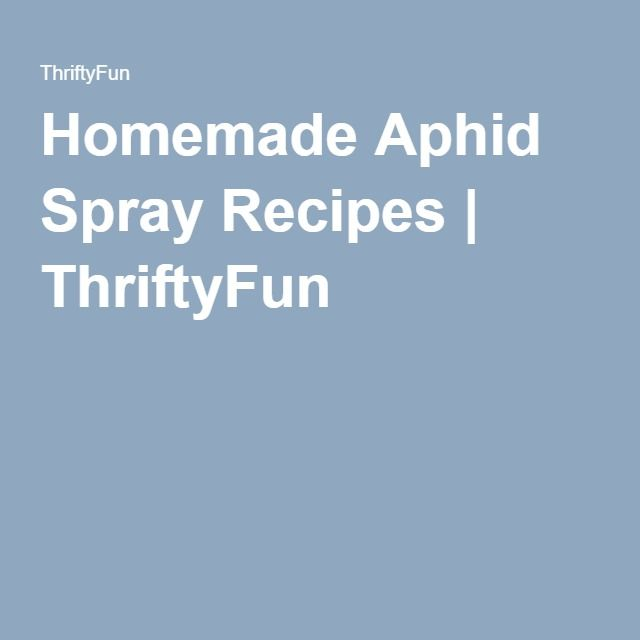 how to make aphid spray
