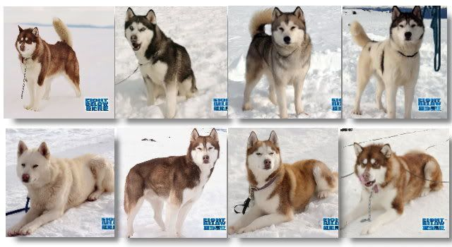 Eight below Maya, Trueman, Max, Shorty, Shadow, Old Jack ...