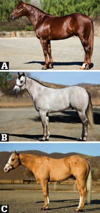 Conformation Clinic: Western Pleasure Prospects  My absolute favorite part of Horse and Rider Magazine!