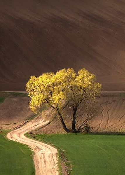 Yellow tree with Green and Brown. | See More Pictures | #SeeMorePictures