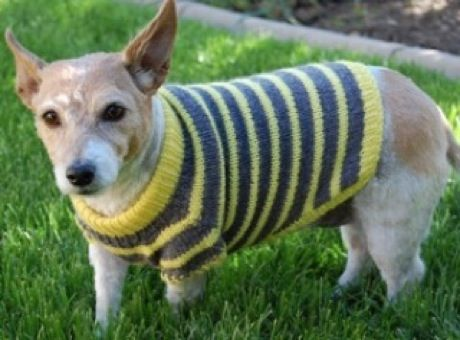 Free Easy Crochet Dog Sweater Pattern - Knitting n Crochet dog sweaters P...