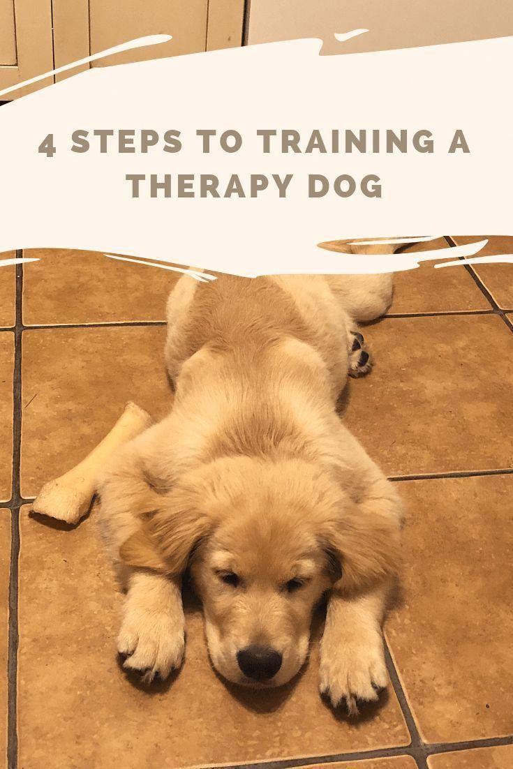 Dog Stuff Dog Ideas Dog Care Dog Tips Dog Grooming Doggrooming