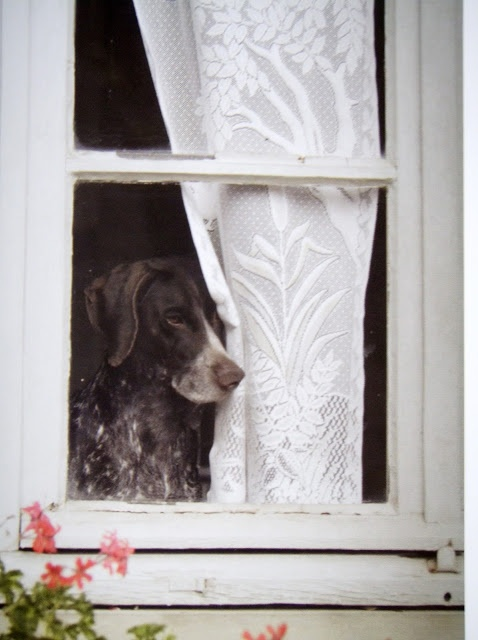 Aw poor baby.....waiting for someone to come home...............................