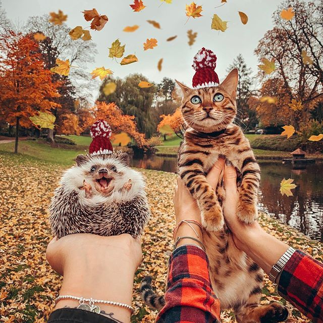 14 Fun Facts You Didn't Know About Bengal Cats Page 2 of