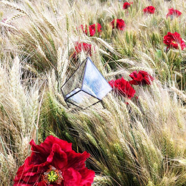 Я тут хотела с вами поговорить, спросить вашего совета. 🙋 Дорогие друзья, хотели бы вы, чтобы розыгрыши стали постоянными? Мы можем разыгрывать не только готовые флорариумы, но и цветы, пустые формы и т. д.  💃Ну что, вы за? Жду вашего ответа! ☺️ #цветы #florarium #флорариум #флорариуммосква #витраж #homedecor #decoration #подарок #weddingflowers #loft #weddingstyle #echeveria #подарокжене #стекло #цветывинтерьере #москвацветы #glassbox #Тиффани #Витражмосква #Витражимосква #ЦветочныйДжем…