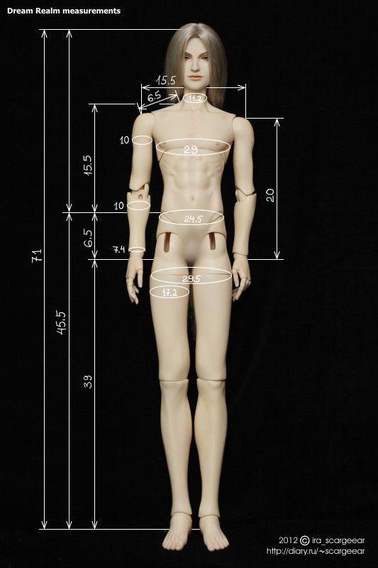 Dream Realm 70+ male body measurements by scargeear