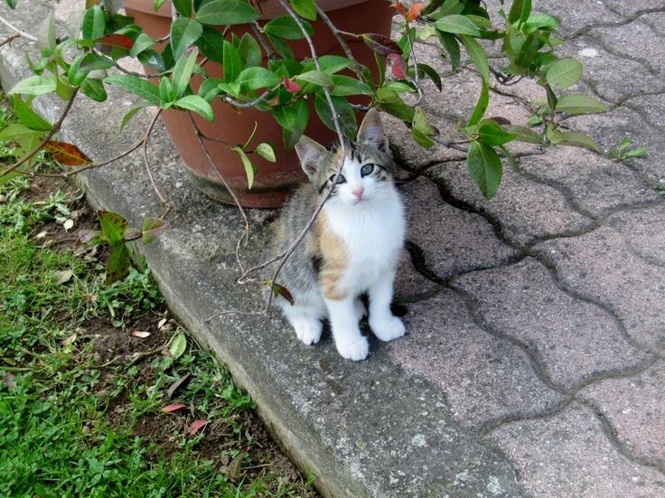 Cat of Capranica #lazio #italy