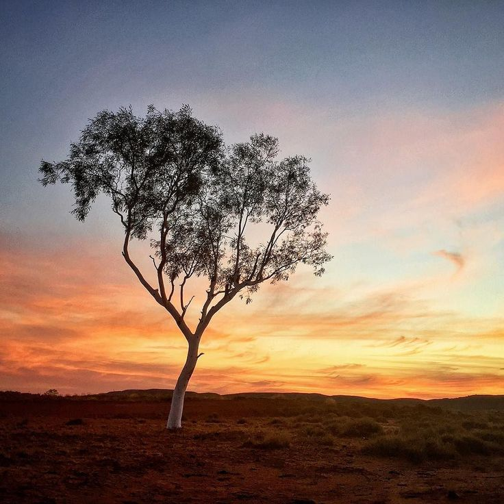 Sunset on the drive back to community from town. I didn't have my good camera equipment just my iPhone unfortunately but that's just the way it is sometimes!  // #pilbara #gumtree #sunset