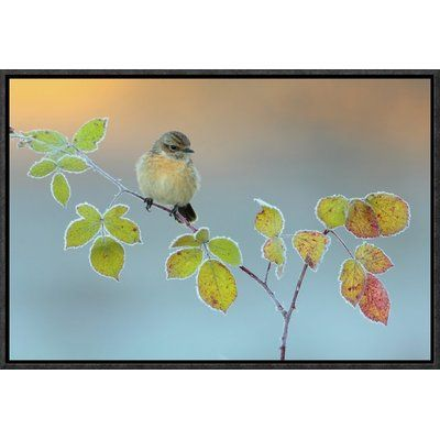 """Global Gallery 'Winter Colors' by Andres Miguel Dominguez Framed Graphic Art Size: 24"""" H x 36"""" W x 1.5"""" D"""